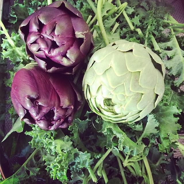 Kale & artichoke from my garden #pinolehome #levasfarm #pinole #homegardening