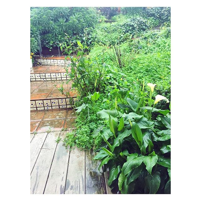 Not sure which one is happier: me or my garden! Rain Sentimentalism 3.