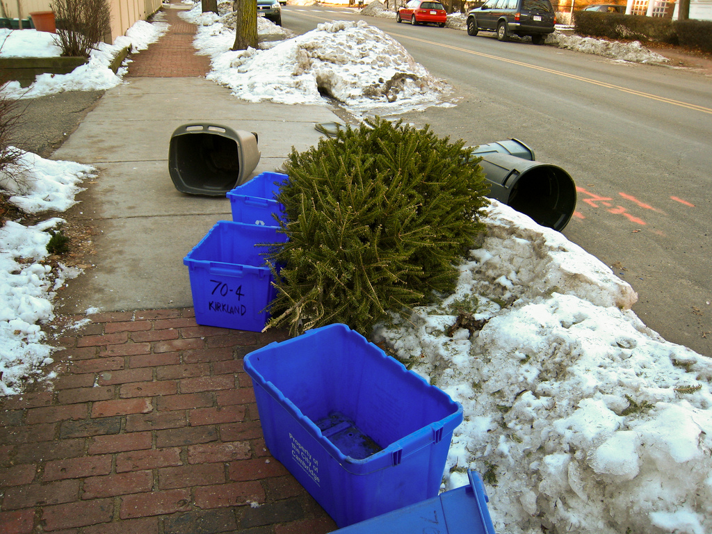 Waste Management Christmas Tree Collection