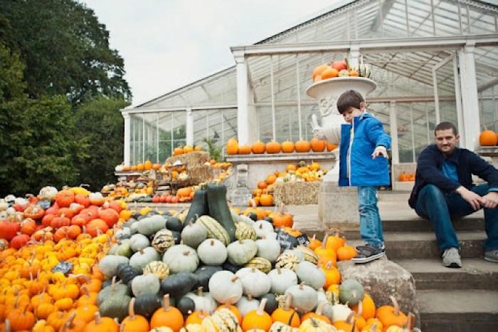 Kew Gardens Pumpkins 16
