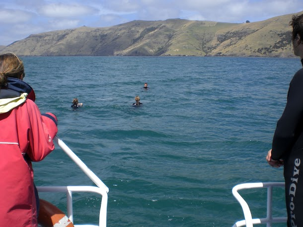 Looking off the back of the boat at swimmers