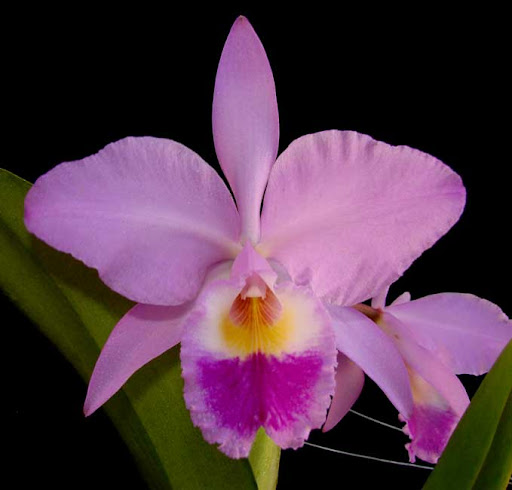 10 Unfortunate Orchid Names | Brooklyn Orchids