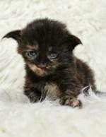 Baby Fatima, 2 uger
