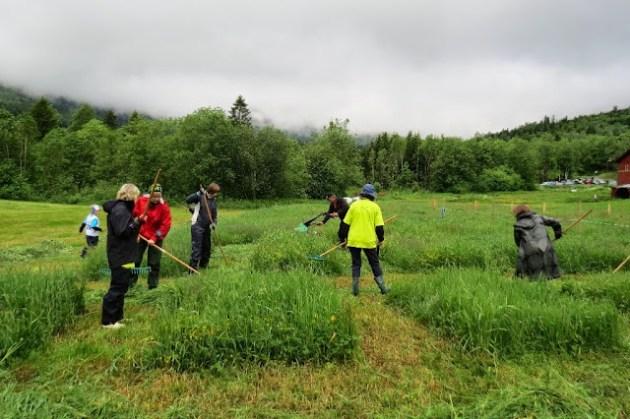 Kosidba u Norveskoj- Turisticka organizacija opštine Ljig179