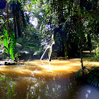 The mysterious Amazon river