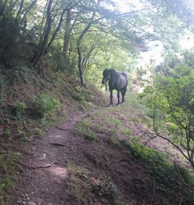 The black horse that we encountered