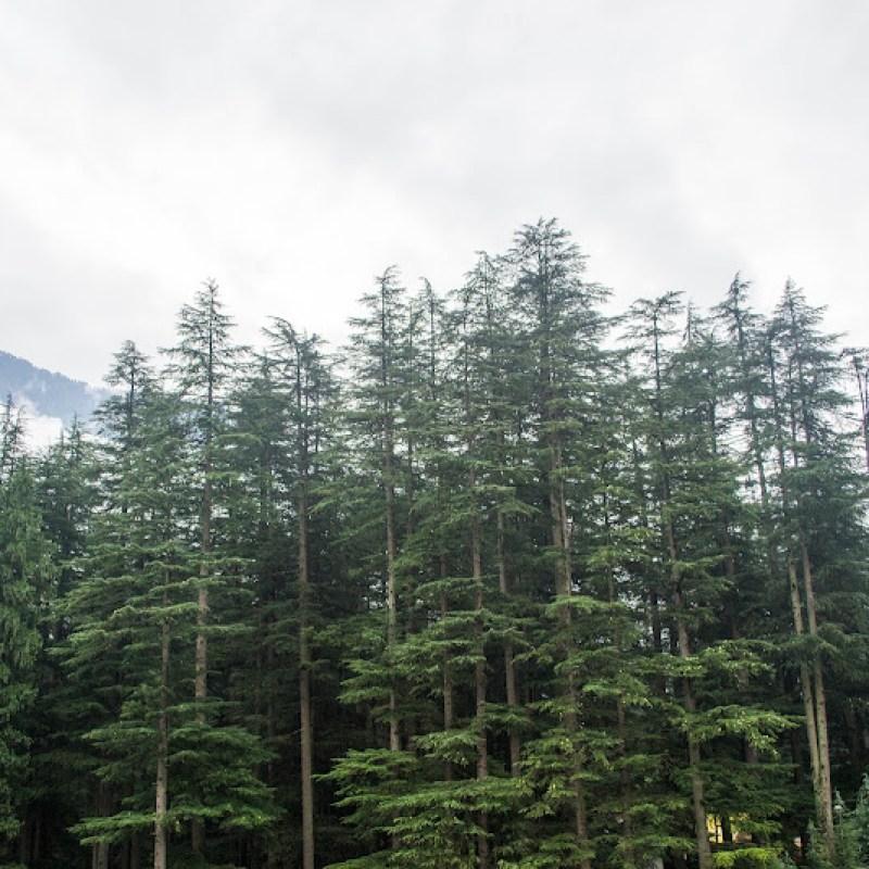 manali to naggar by road