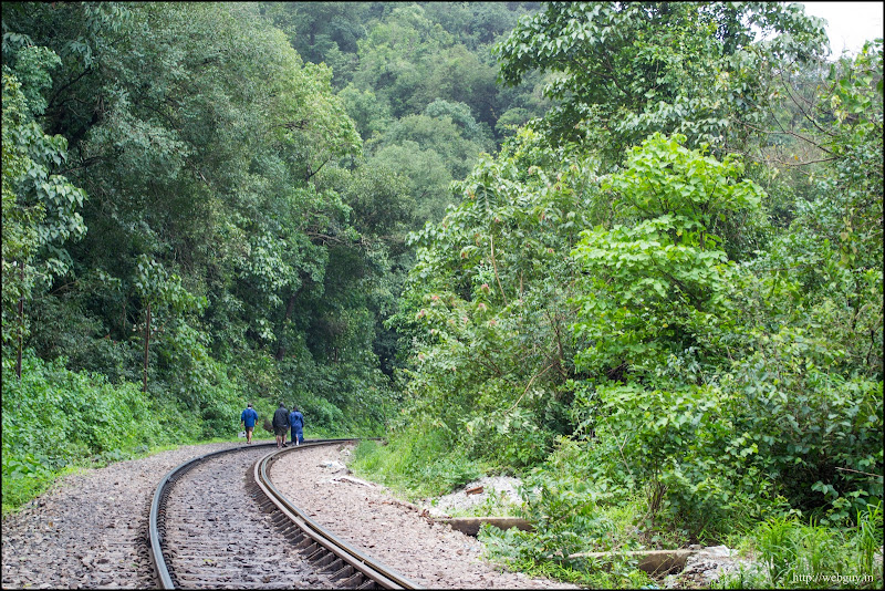 Greenery again after the tunnel - Doodhdagar Trek