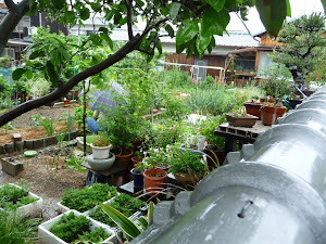 i'm gonna have a garden like this one day