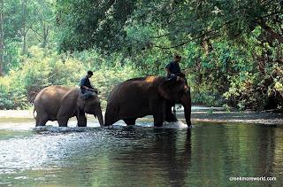 Chiang Mai Elephant Center