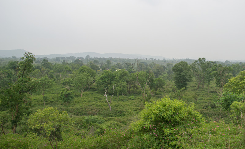 Deep and green forests of Bandipur tiger reserve