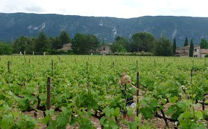 i think these are th luberon hills. sol is in the vineyard which was on the property we stayed at (he broke his brand new sword after about a week)