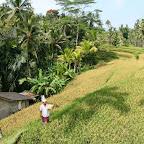 0530_Indonesien_Limberg.JPG