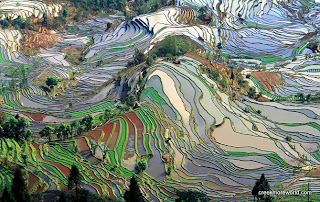 Dragon's Backbone Rice Terraces