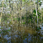 Flooded forest #2