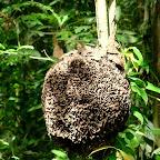 A beautiful termite nest.