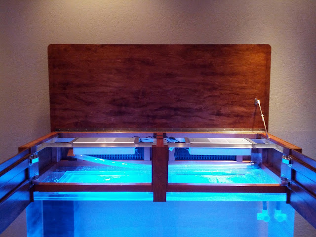 King Whiskers: Custom 75 Gallon Aquarium Hood with AI Sol LED Lights
