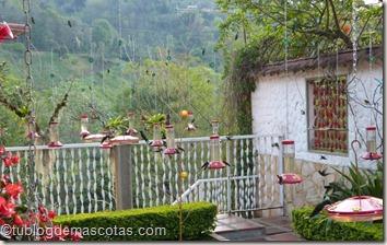 Tener colibries en el jardín