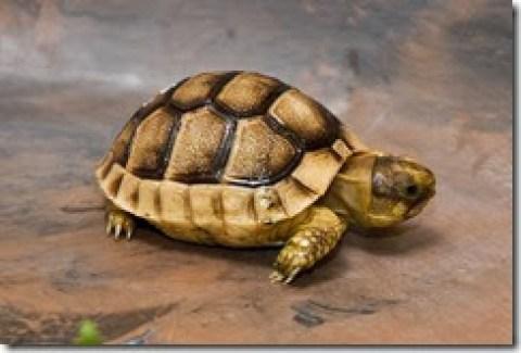 tortoise001
