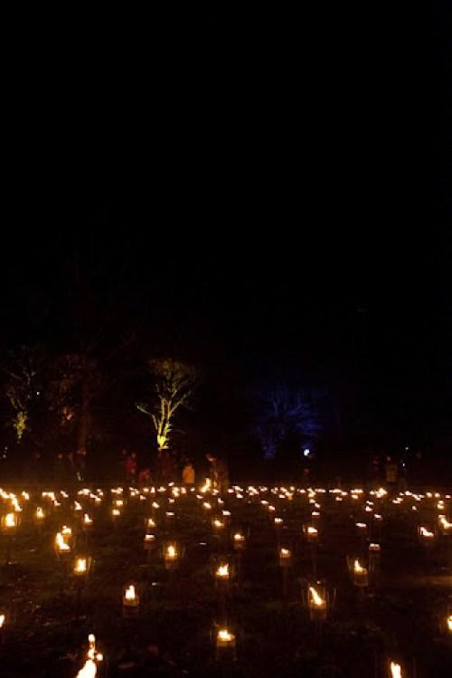 Christmas at Kew 35