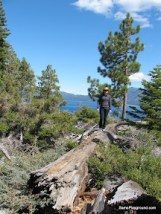 In the Bush - Lake Tahoe.JPG