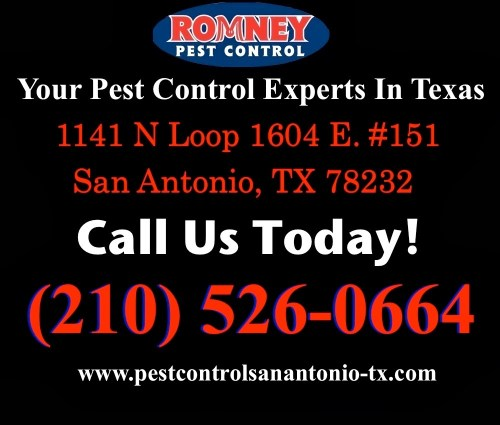Medium Of Romney Pest Control