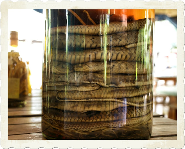 Snake wine,Asian snake wine,Wine with snake or scorpion