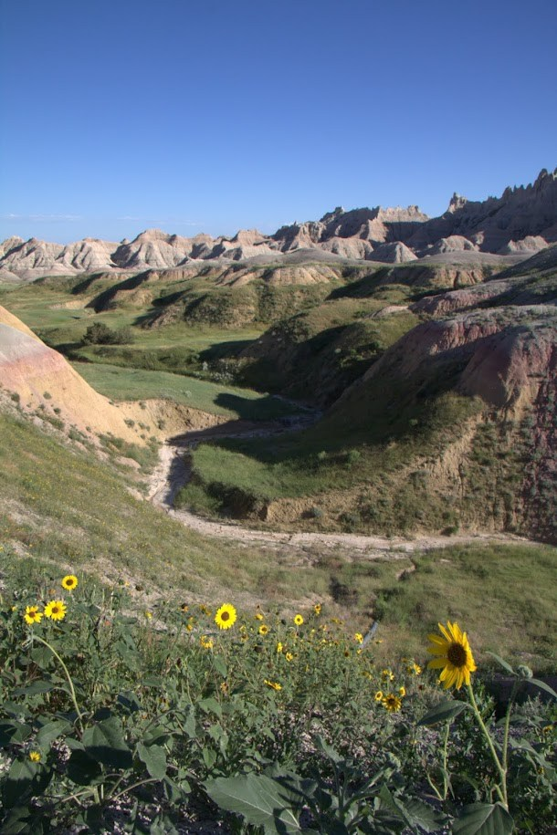 Sunflowers in the valley - Badlands National Park.jpg