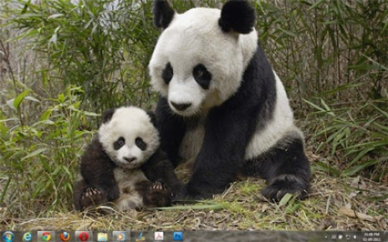 Giant Panda Windows 7 Theme–Free Download
