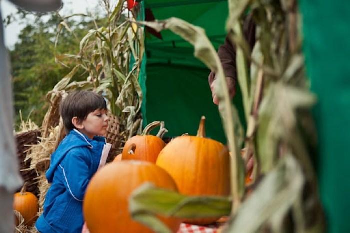 Kew Gardens Pumpkins 17