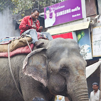seeing an elephant on the New Delhi streets is not so uncommon