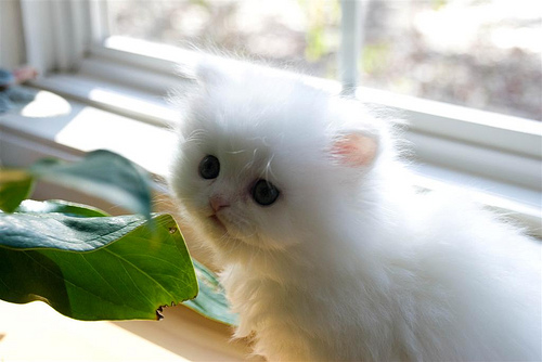 cute cute kitten cat pic