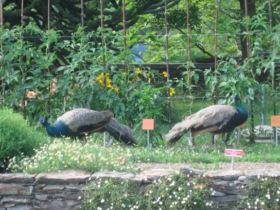 Wildlife on the island