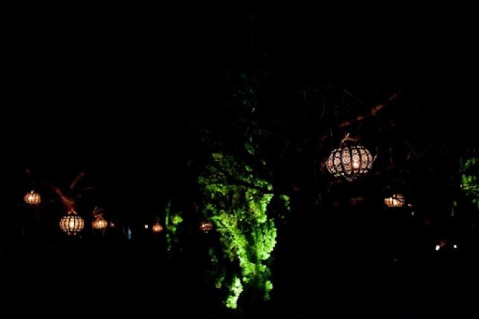Christmas at Kew 18