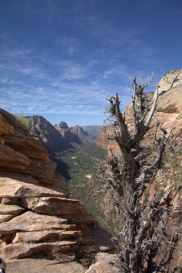 Looking Down Zion Canyon