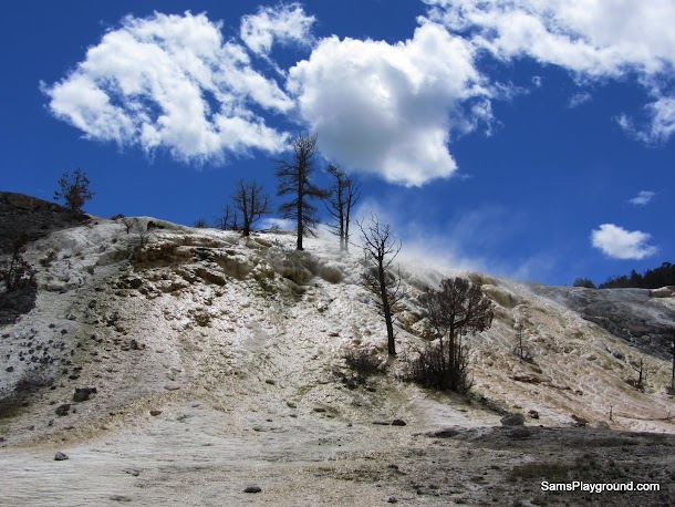 A few bare trees struggle on the calcium carbonate covered hillside in Mammoth Hot Springs - Yellowstone