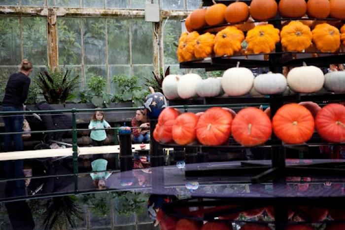 Kew Gardens Pumpkins 6