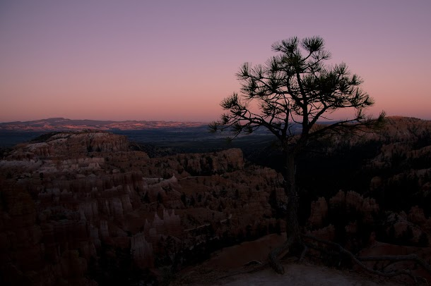 Tree & Sunset - Bryce Canyon National Park