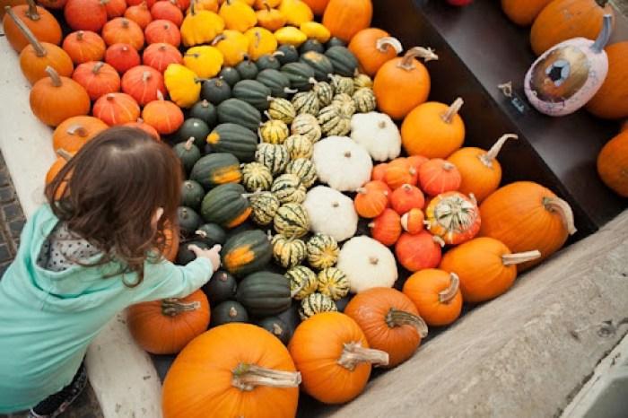 Kew Gardens Pumpkins 10