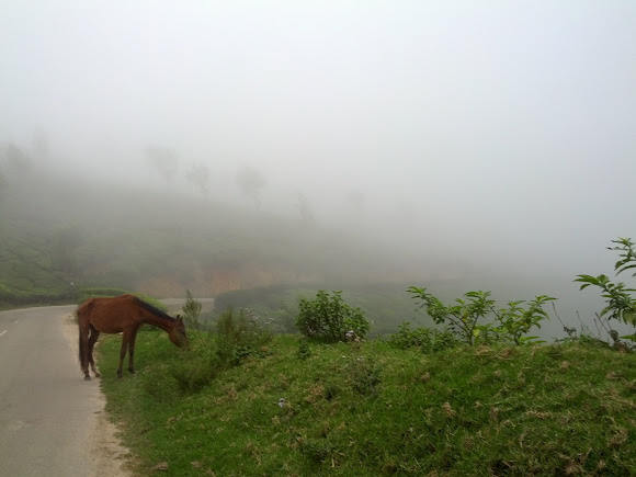 Horse in the clouds!