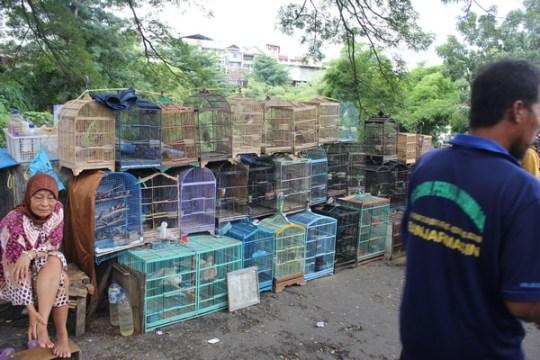 Pasar Burung Splendid