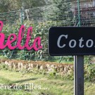 hellocoton-by-libelul-jane