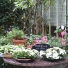 jardin-de-ville-by-libelul