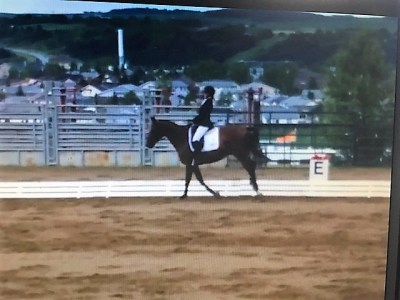 tralee showcanter