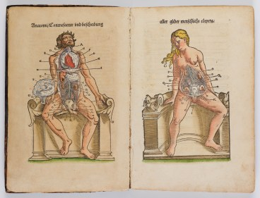 Discover anatomical illustrations
