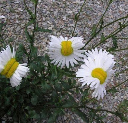 fake-deformed-flowers
