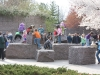 2011_04_cherry_blossoms-52