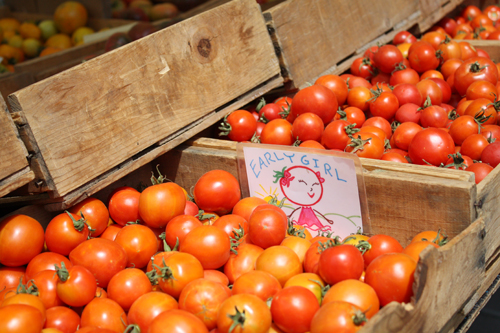 Early Girl Tomatoes at the Ferry Building