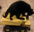 truck riding foster kitten