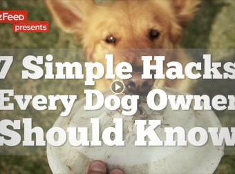 7 Dog Hacks you should know